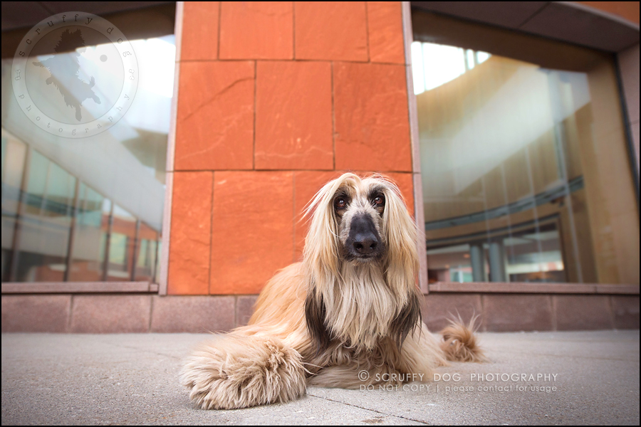 09_ontario_dog_stock_photography_dimitri willow steenblik-207
