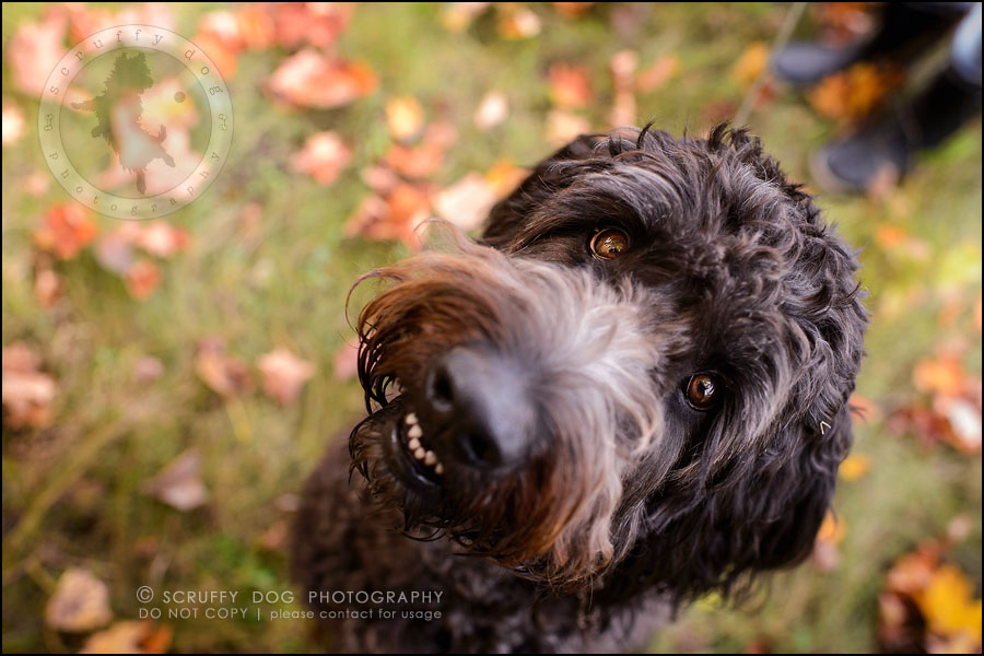 09_waterloo_ontario_best_pet_photographer_murphy odonovan-62