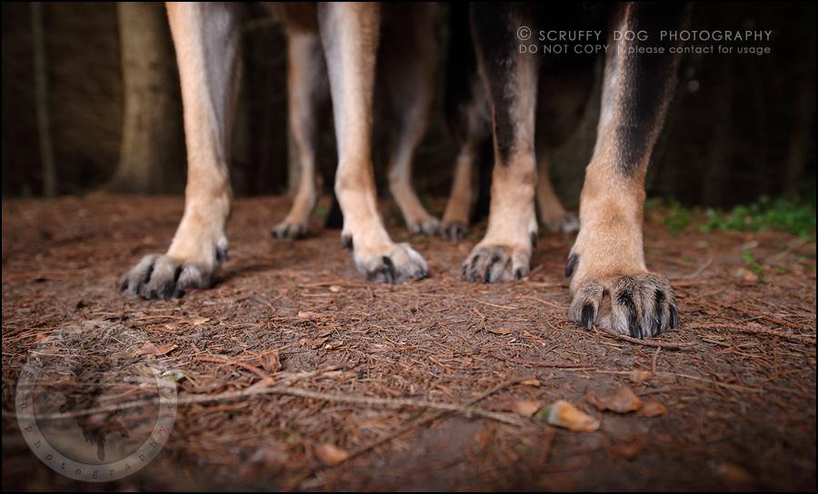 10-toronto-ontario-best-professional-pet-photographer-maya blitz-606
