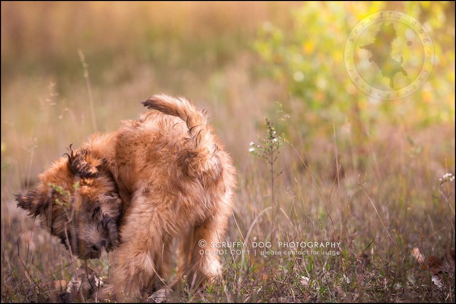 10-toronto-ontario-best-professional-pet-photographer-milford giza-164