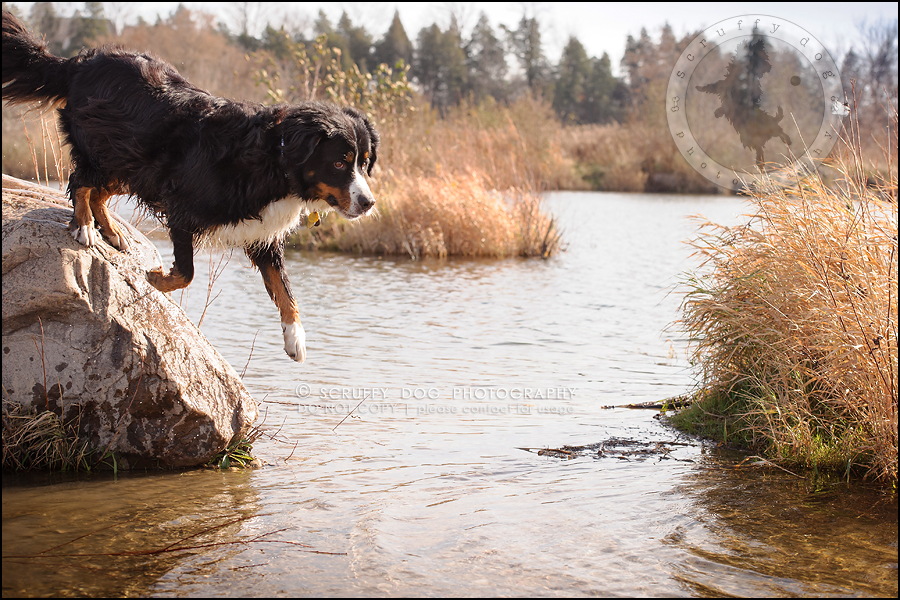 10-toronto-ontario-professional-dog-photographer-henry martha-70