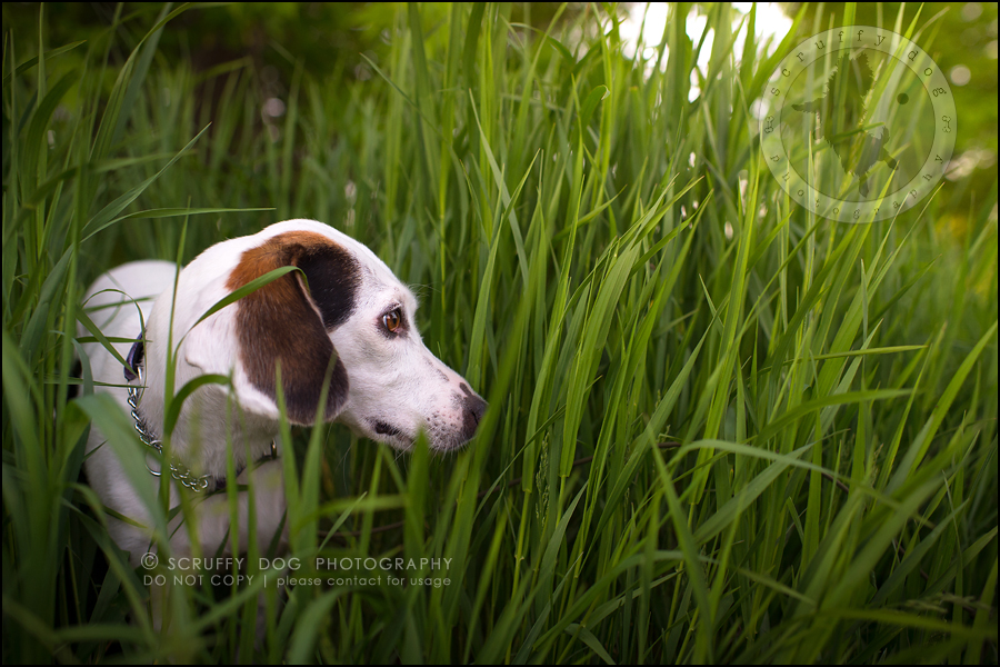 10-toronto-ontario-professional--dog-photographer-lucy frederick-332