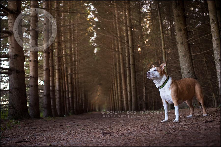 10-toronto-ontario-professional-pet-photographer-jade perry-568