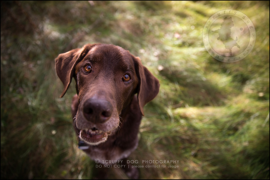 10-waterloo-ontario-best-professional-dog-photographer-max shoup-113