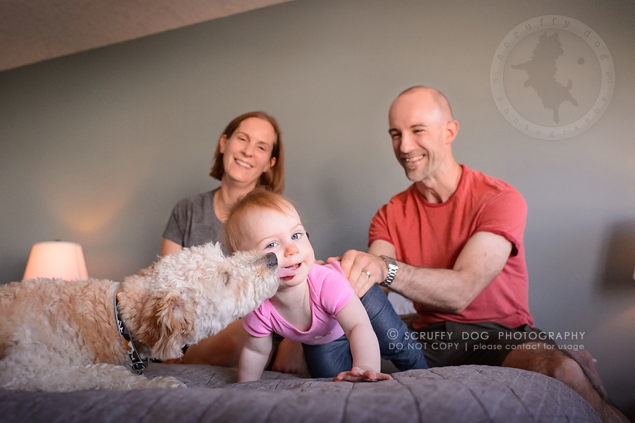 10-waterloo-ontario-dog-stock-photography-gulliver george-163