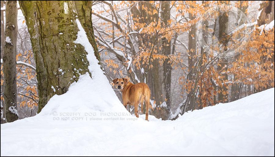 10-waterloo-ontario-professional--dog-photographer-best-makeda slinger-123