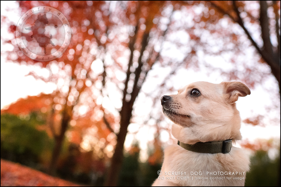 10-waterloo-ontario-professional-dog-photographer-best-max rooke-249