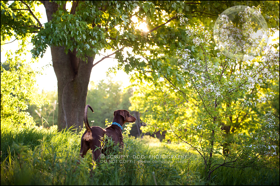 10_guelph_ontario_pet_photographer_best_dog_reese hunsberger-235