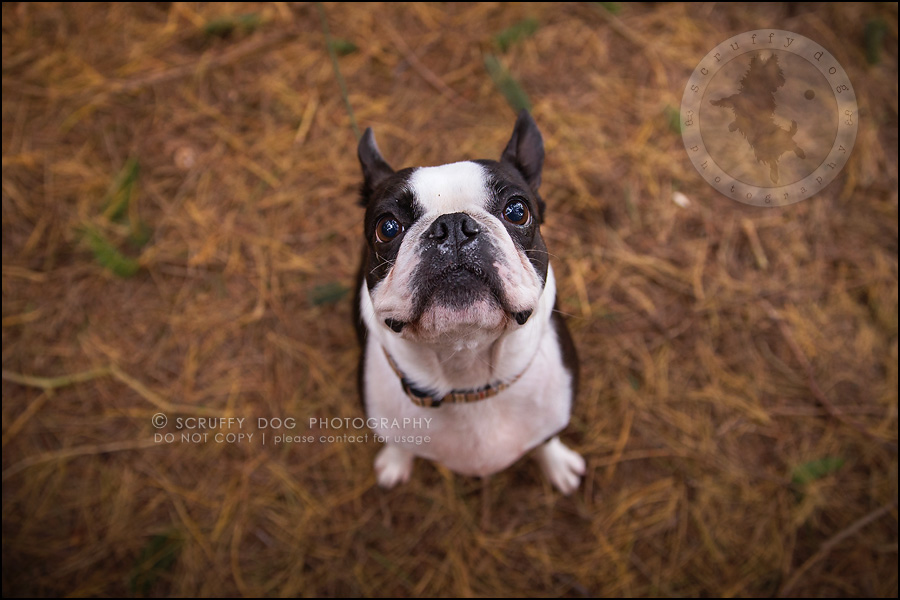 10_kitchener_ontario_pet_photographer_best_dog_princess dot carroll-89