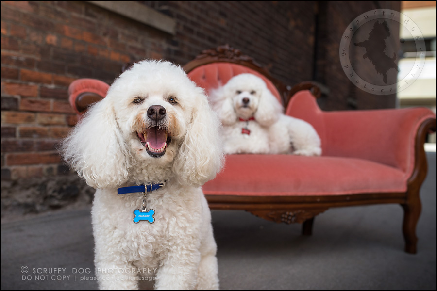 10_ontario_dog_stock_photography_dwss-223