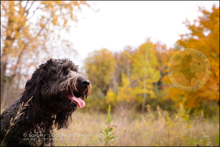 10_waterloo_ontario_best_pet_photographer_murphy odonovan-14