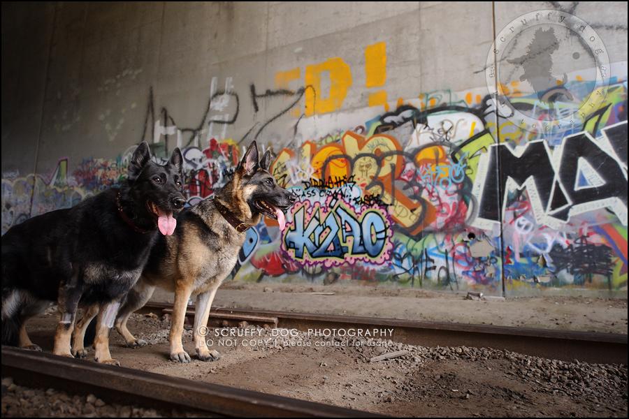 11-toronto-ontario-best-professional-pet-photographer-maya blitz-802