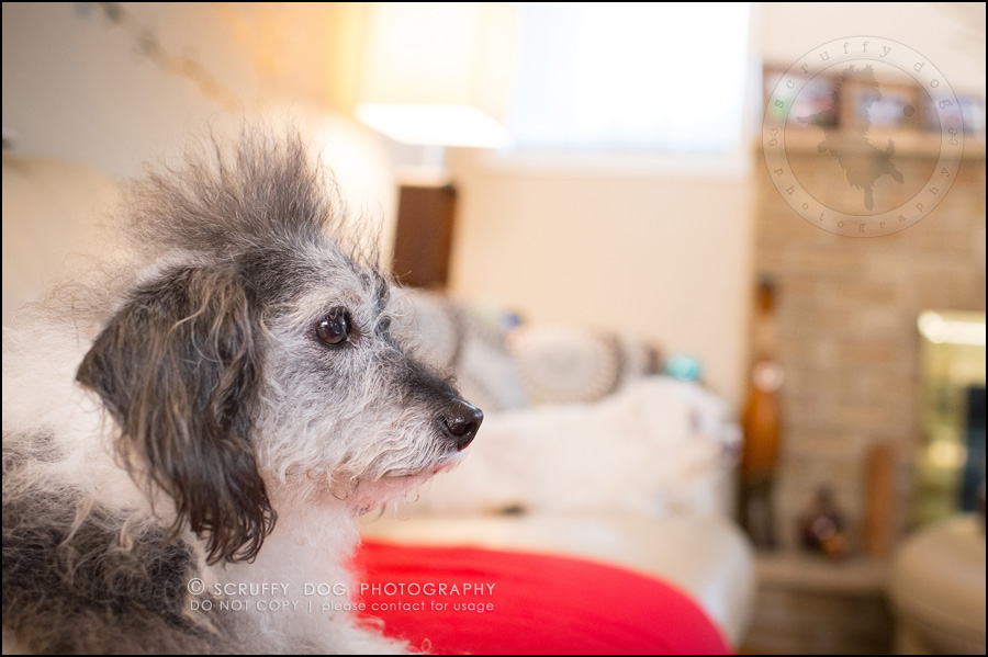 11-toronto-ontario-best-professional-pet-photographer-mika bobby worton-1179