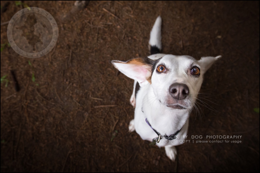 11-toronto-ontario-professional--dog-photographer-lucy frederick-130