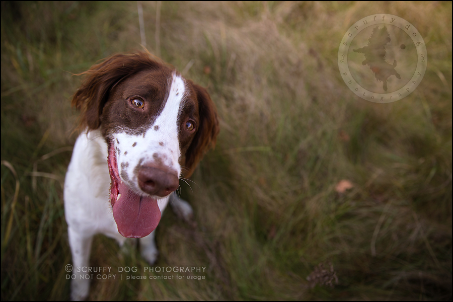 11-toronto-ontario-professional-pet-dog-photographer-jake boucher-246