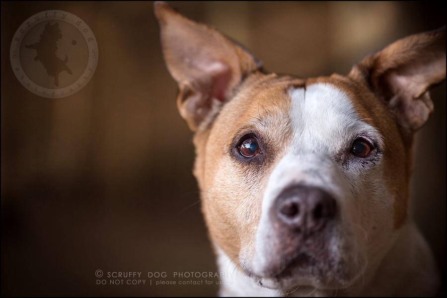 11-toronto-ontario-professional-pet-photographer-jade perry-644