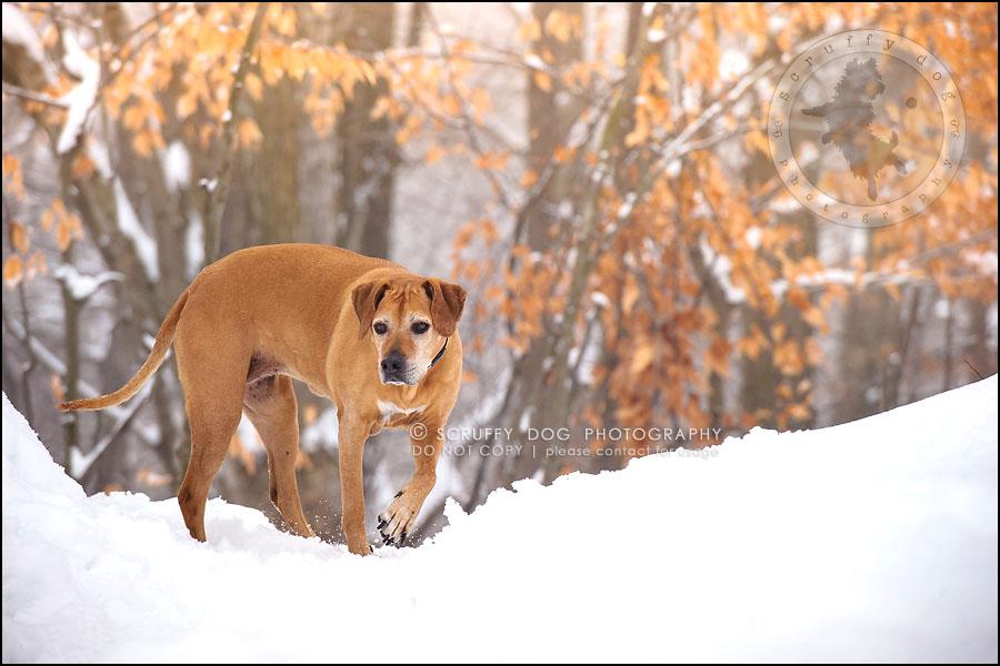 11-waterloo-ontario-professional--dog-photographer-best-makeda slinger-125