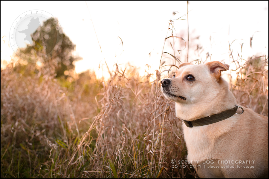 11-waterloo-ontario-professional-dog-photographer-best-max rooke-201
