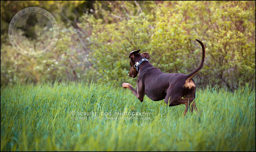 11_guelph_ontario_pet_photographer_best_dog_reese hunsberger-103