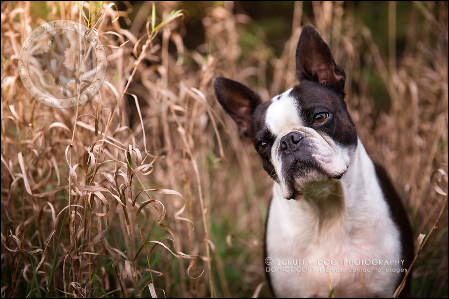 11_kitchener_ontario_pet_photographer_best_dog_princess dot carroll-124