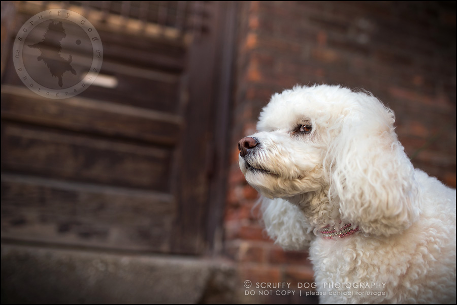 11_ontario_dog_stock_photography_dwss-364