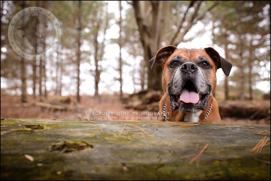 12-brampton-ontario-best-professional-dog-photographer-moose rocket-699
