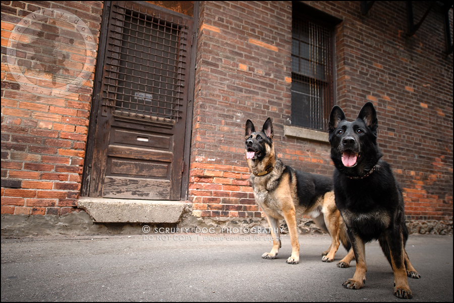 12-toronto-ontario-best-professional-pet-photographer-maya blitz-819