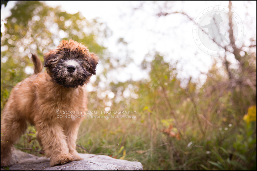 12-toronto-ontario-best-professional-pet-photographer-milford giza-336
