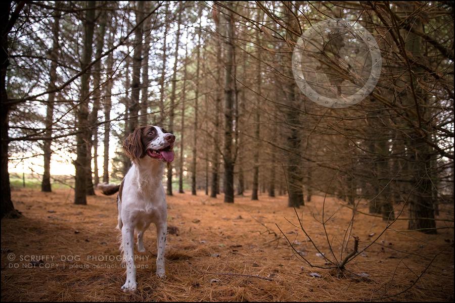 12-toronto-ontario-professional-pet-dog-photographer-jake boucher-847