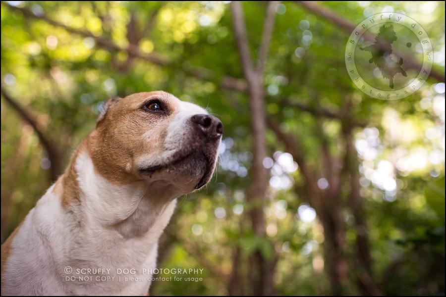 12-toronto-ontario-professional-pet-photographer-jade perry-42