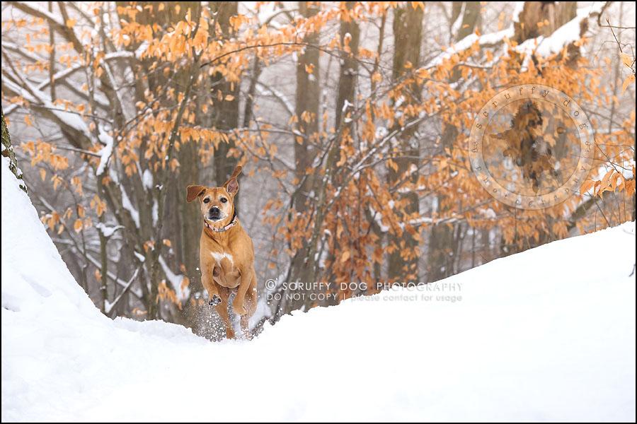 12-waterloo-ontario-professional--dog-photographer-best-makeda slinger-163