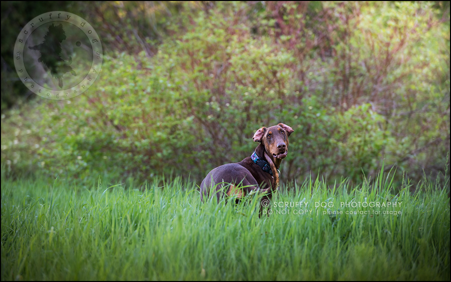 12_guelph_ontario_pet_photographer_best_dog_reese hunsberger-130