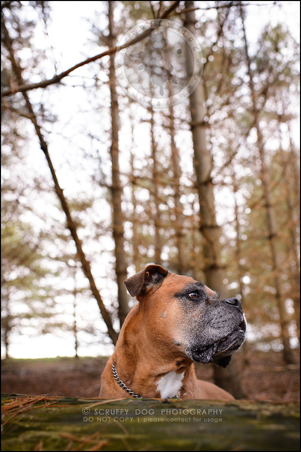 13-brampton-ontario-best-professional-dog-photographer-moose rocket-680