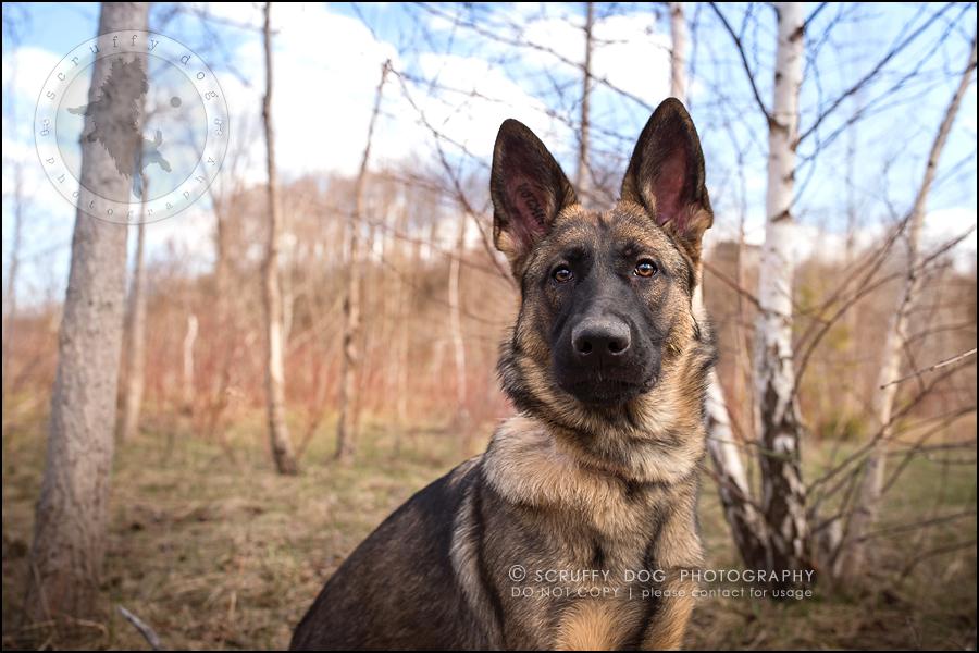 13-toronto-ontario-best-professional-pet-photographer-blitz zelda baker-273