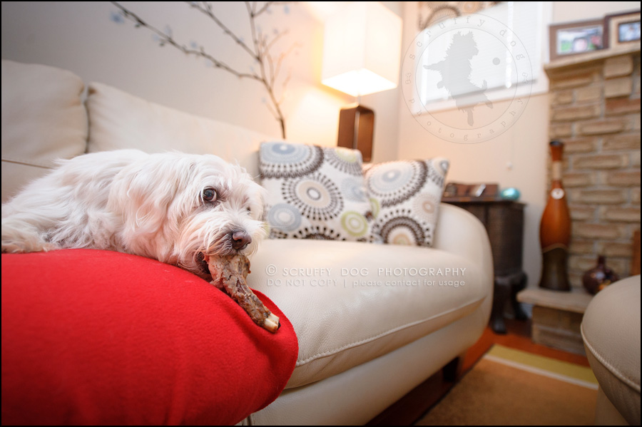 13-toronto-ontario-best-professional-pet-photographer-mika bobby worton-628