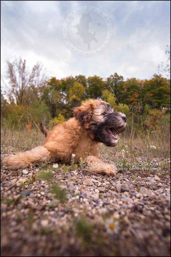 13-toronto-ontario-best-professional-pet-photographer-milford giza-129