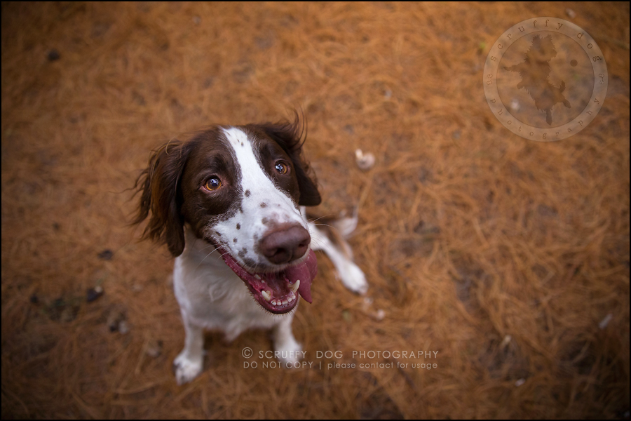 13-toronto-ontario-professional-pet-dog-photographer-jake boucher-821