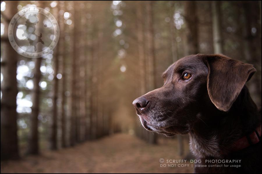 13-waterloo-ontario-best-professional-dog-photographer-max shoup-201