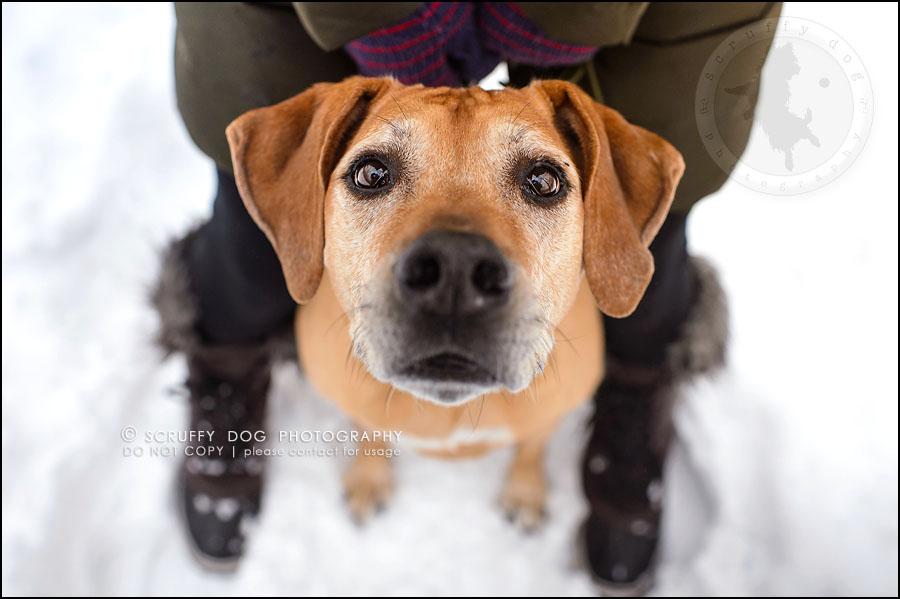 13-waterloo-ontario-professional--dog-photographer-best-makeda slinger-288