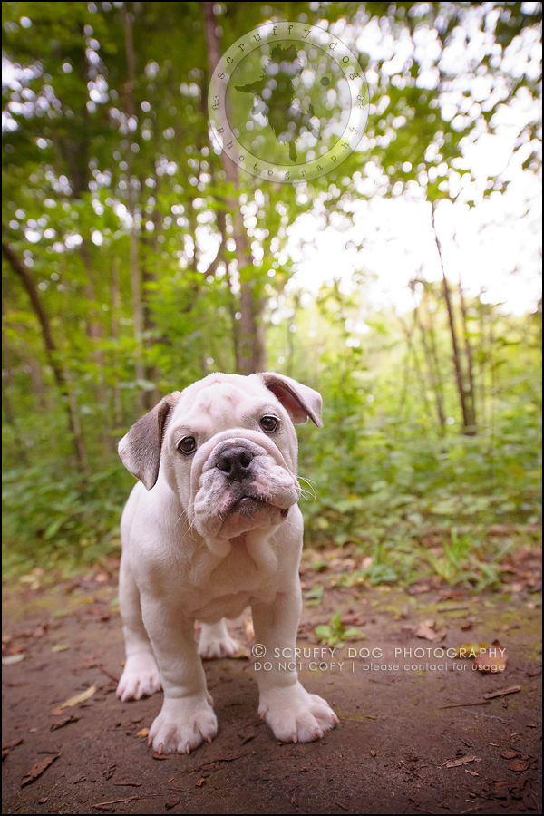 13_guelph_ontario_pet_photographer_best_dog_oliver eleanor fleming-196