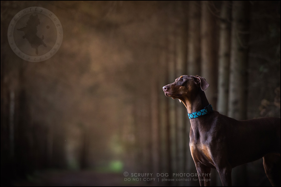 13_guelph_ontario_pet_photographer_best_dog_reese hunsberger-376