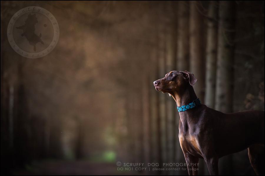 13_guelph_ontario_pet_photographer_best_dog_reese hunsberger-376