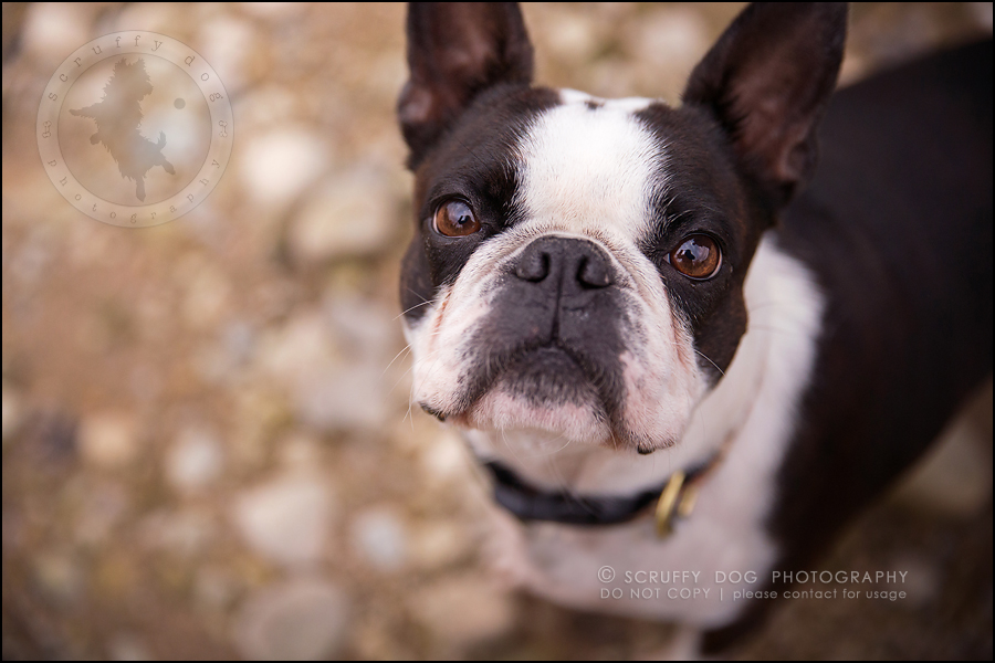 13_kitchener_ontario_pet_photographer_best_dog_princess dot carroll-510