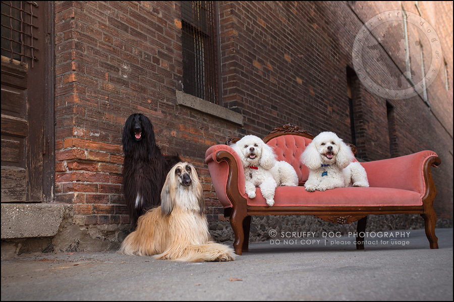 13_ontario_dog_stock_photography_dwss-272