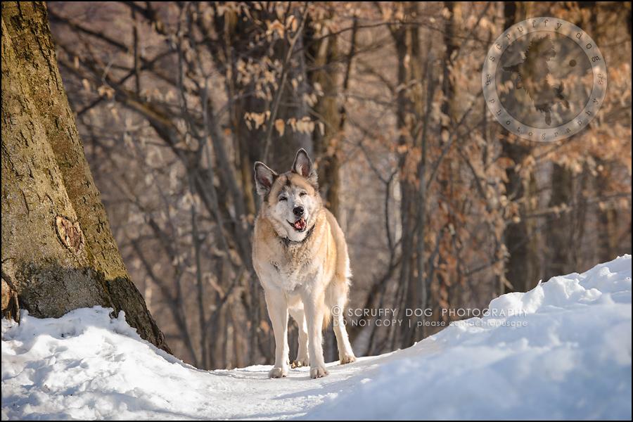 13_toronto_ontario_dog_stock_photography_grace zoe carr-365