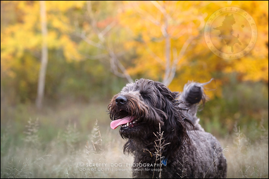 13_waterloo_ontario_best_pet_photographer_murphy odonovan-416