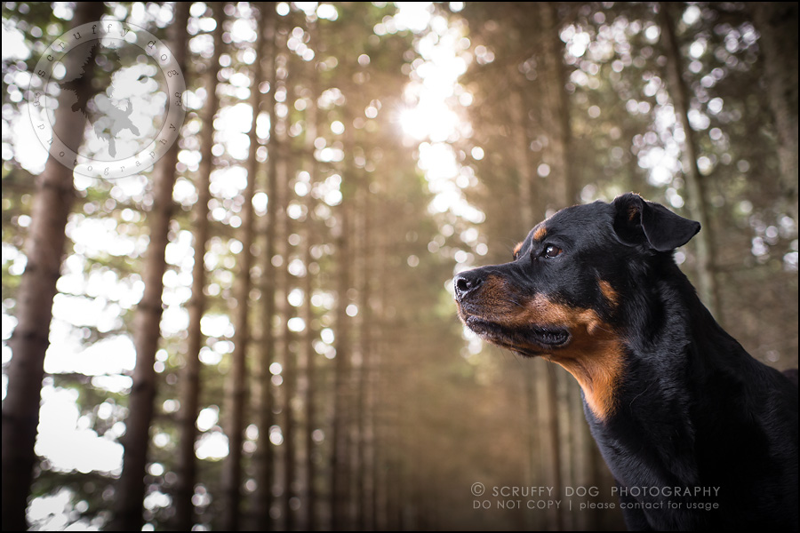 13toronto_ontario_dog_stock_photography_geordi jessie ladrillo-312