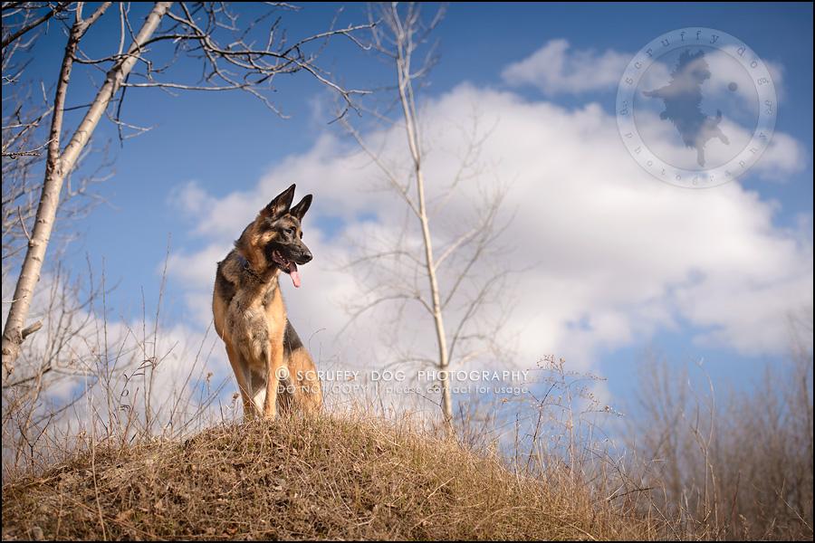 14-toronto-ontario-best-professional-pet-photographer-blitz zelda baker-284
