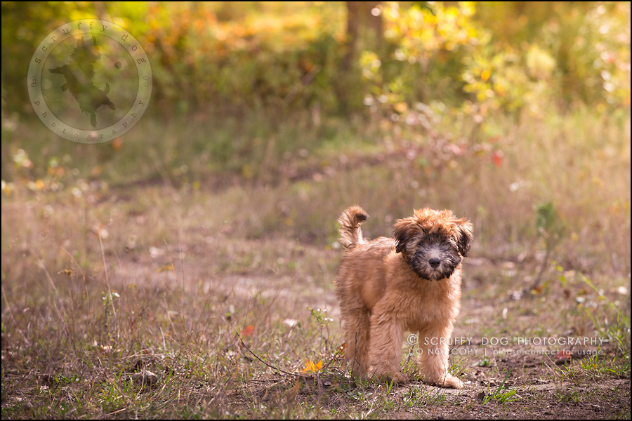 14-toronto-ontario-best-professional-pet-photographer-milford giza-188