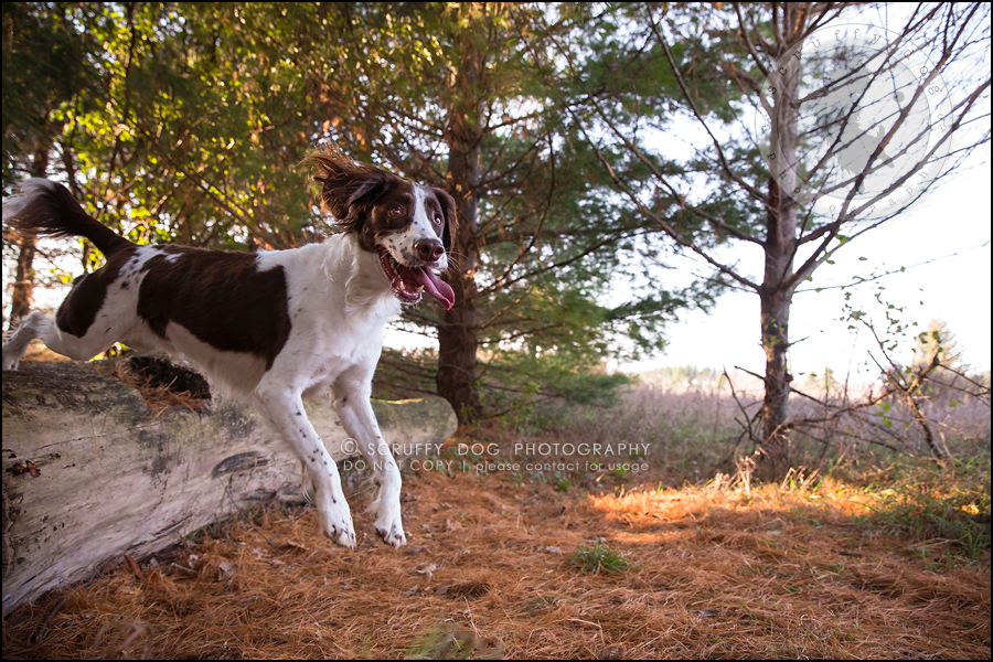 14-toronto-ontario-professional-pet-dog-photographer-jake boucher-497